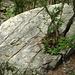 mächtige Steine