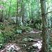 Weg durch den Wald, steiler, als auf dem Foto erkennbar