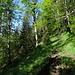 weiter oben wird der Wald lichter und schöner