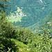 Alpe Cropia zum Catt da Ribia - überwucherte Weide mit Aussicht auf Niva
