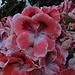 Blütenpracht überall! / Sono magnifici i fiori ovunque nel paese!