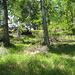dann kurz vor Fronn im lichten Wald