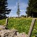 Alpweide mit Natursteinmauern im Gebiet Forstegg-Zapfen