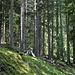 im Wald oberhalb Lain, im Wald Got da Lain