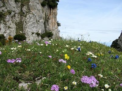 Blumen über Blumen auf der Alp Sigel