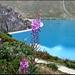 Ein Gänseblümchen (oder so...) und der See.
