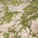 Die felsige Runse bei Kurve 22. Wie so oft ist sie in Wirklichkeit um einiges steiler, als es auf dem Foto den Anschein macht. Hier beginnt der Schafweg, der zur Mythenmatt führt. Die Beschriftung der Kurve auf dem Stein rechts im Bild ist knapp zu erkennen. In Originalgrösse ebenfalls die blaue Markierung gegen Ende der Runse, die den Weg weist.