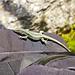 Könnte ein Exemplar der Gattung Arcteryx sein...