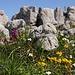 Verschiedene Blumen spriessen um die Steine und Felsen herum