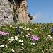 Blumenmeer auf der Alp Sigel