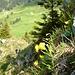 Blick vom Grat des Neuenalpspitz Richtung Steiner Berg