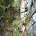 unterhalb des hüttli im benderwald