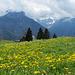 blühende Almwiese auf dem Weg nach Braunwald