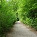 Grosse Wegstrecke durch den Wald, mal so...