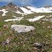 Dort oben wäre der wegverlauf vom Nebelhorn herunter gewesen. Wir haben uns aber für den Weg durch die bunten Blumenwiesen entschieden.