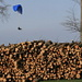 paraglider on the woodpile