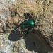 mühsam rackert sich der kleine Käfer auf dem rauhen Fels ab