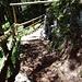 Abstieg durch den Spirewald