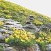 Hängende Gärten voller Wundklee