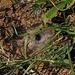 Trichternetzspinnennetz leider ohne Trichternetzspinne.