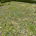 Blumenwiesen (am Amatschonjoch/aber auch durch das ganze Lorenzatal hindurch), wie ich sie noch nicht gesehen habe ...