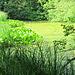 Ein Weiher im Chüsenrainwald.
