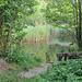 Der einzige Weiher im Chüsenrainwald der einen Zugang hat.