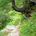 Abstieg von der Efra-Hütte nach Frasco - Impressionen des wunderschönen Weges
