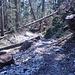 Das Setting meines Verhauers heute Vormittag, natürlich in der Gegenrichtung. Ich kannte den Weg nicht und bin den vielen umgestürzten Bäumen, einem Trampelpfad und  ein Paar hingelegten Steinen folgend, viel zu tief ausgewichen..
