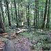 Waldstück im ersten Aufstieg nach Les Oiellons.