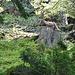 Auf einem Baumstumpf präsentiert sich - etwa 10 m neben dem Wanderweg in den Kessel hinab - ein Steinbock, wohl gesponsert vom Neuenburger Tourismusverein ;-)