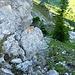 Der erste Pfeil, deutlich die Pfadspuren der Umgehung des ersten Felsaufschwunges