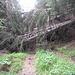 doch bald ist der Weg durch umgestürzte Bäume blockiert<br />die Passage lässt sich auf dem talseitigen Wiesenhang leicht umgehen