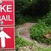 Der Single Trail auf dem Uetliberg.