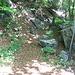 Im Staatswald unterhalb der Gonzenwand