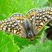 Prächtiger Schmetterling in der ansonsten düsteren Nordflanke.