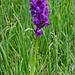 überall Orchideen