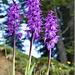 schöne Orchideengruppe