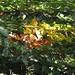 Farbenspiel im Herbstlaub
