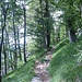 In mäßiger Steigung durch hübschen Wald hinauf. Der Weg bleibt immer etwas unterhalb des Grats