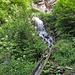 Steilstück am Schennawaal