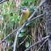 Vogelwelt im Zoom (leider shclechte Qualität) - wer ist das?