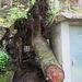 der Baum wurde von dem Haus gestoppt