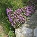oder diese hübschen kleinen Blumen