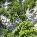 Teil der Felswand vor dem Tunnel
