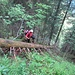 urige Waldabschnitte ...