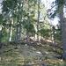 Attraverso i resti dei lavori forestali