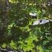 Vorgestern noch ein [http://f.hikr.org/files/1777764l.jpg Wasserfall]