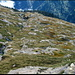 Zum Teil wie ein Laserschneider hat sich der Ri di Vedle in die Landschaft hereingefressen, bzw. -erodiert.