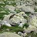 una delle quattro marmotte che ni hanno attraversato il sentiero